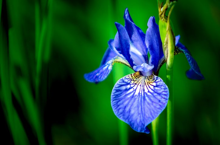 DO NOT visualise or image BLUE FLOWER
